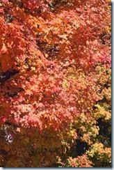 2014-10-26 Oct 26 033