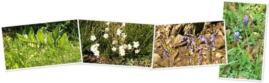 Ver Flores camino de la Tejeda