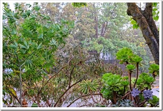 141031_rain