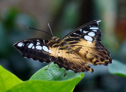 2013-07-05 butterfly pavilion (78)