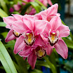 orchid_6.jpg