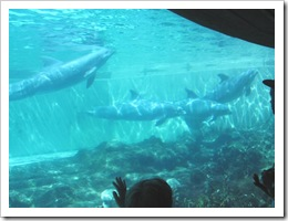 Florida vacation Epcot dolphins in tank2