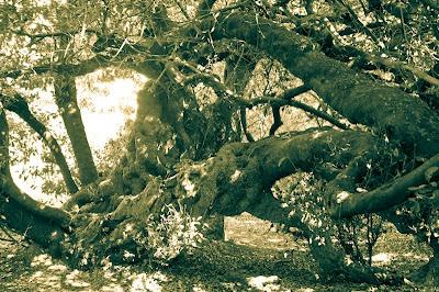 El árbol de correos.