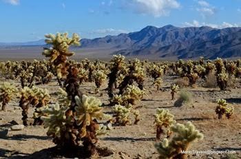 the desert 1_074DSC_0074