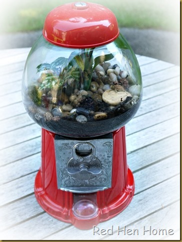 Red Hen Home Gumball Terrarium 8