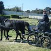 giostra dei cavalli 063.jpg