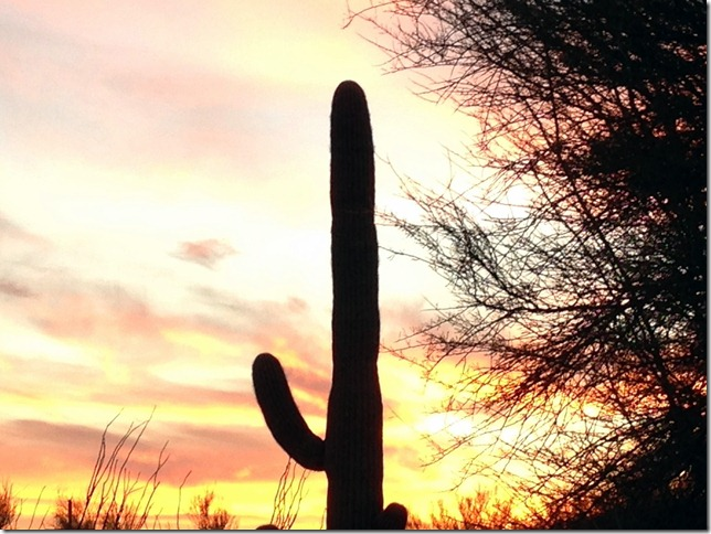 Saguaro sunset 1-20-2013 5-54-52 PM 2048x1536