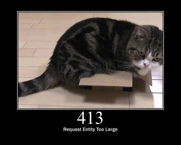 HTTP-Status-Cats-14