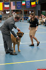 20130510-Bullmastiff-Worldcup-0747.jpg