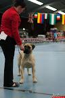 20130510-Bullmastiff-Worldcup-0567.jpg