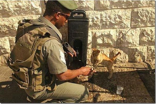 Soldados e animais de estimação (11)