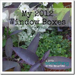 2012 Window Boxes Square Banner