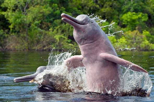 pink-dolphin-kevin_schafer
