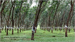 _P6A1551_www.keralapix.com