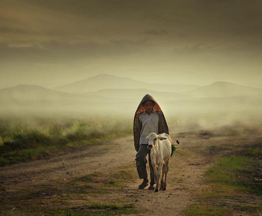 Shepherd boy a19029819