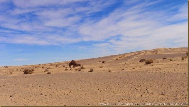 Desierto-415