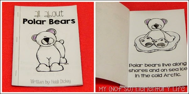 polar bear little reader