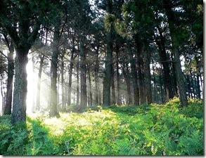 luz_en_el_bosque
