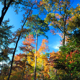 fall colors by Gene Myers - Landscapes Forests ( shotsbygene, nature, color, autumn, fall, trees, virginia, landscape, gene myers,  )
