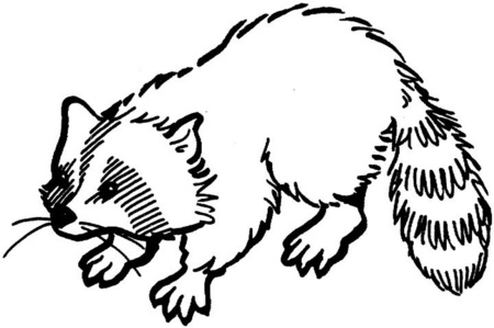 DIBUJOS DE MAPACHES PARA PINTAR Raccoon Face Clip Art Black And White