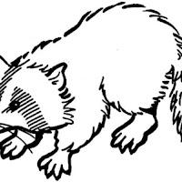 mapache-dibujos-para-colorear.jpg