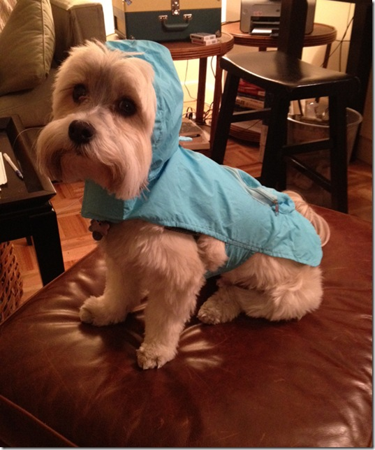 hurricane-sandy-dogs-14