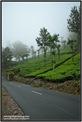 AVV_081__DSC0267-Edit_www.keralapix.com_081