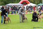 20100513-Bullmastiff-Clubmatch_31108.jpg