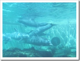 Florida vacation Epcot dolphins in tank1