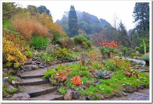 Garden Inspiration: Aloes at UC Botanical Garden, Berkeley