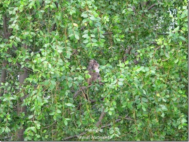 沙巴長鼻猴螢火蟲 (33)
