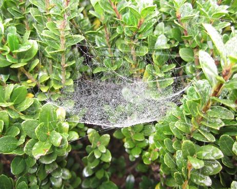SPIDER WEB (4)