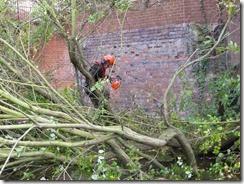 Tree clearance (10)