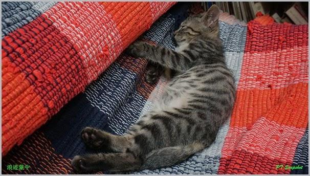 龙门小猫睡觉