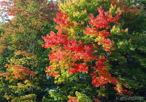 1. autumn-kab