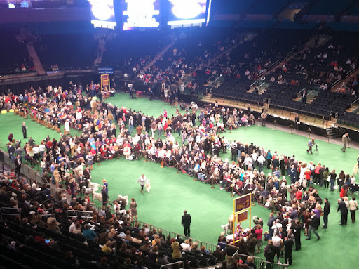 136 Westminster Kennel Club Dog Show - the floor of Madison Square Garden set up for Breed judging