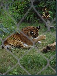 Fresno Zoo 036