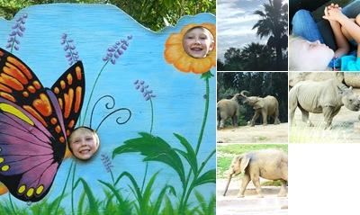 View Safari Animals