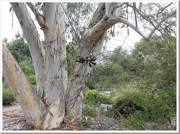 111015_Santa-Cruz_UCSCA_Eucalyptus-pauciflora_10
