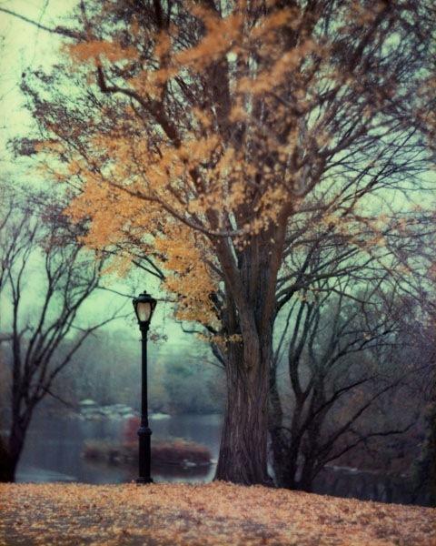 autum_tree_lamp_59