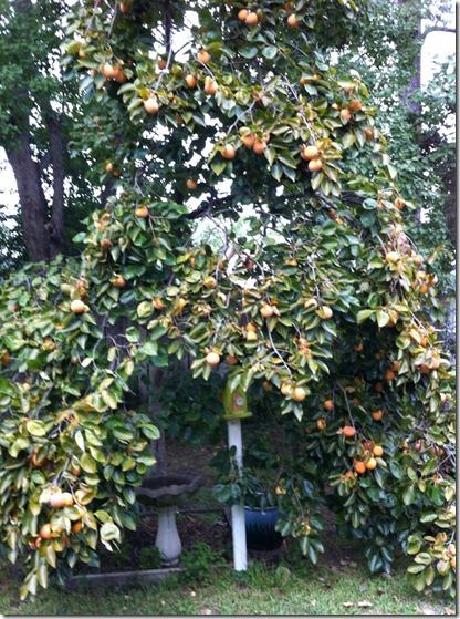 P tree 2 (765x1024)