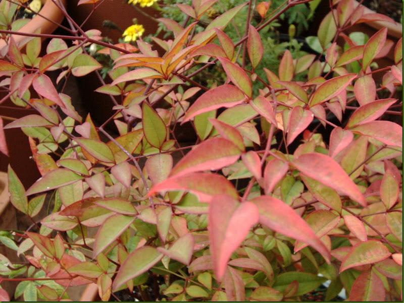 hojas de otoño 2004 009