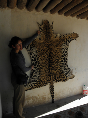 Biologist Verónica Quiroga with a jaguar (Panthera onca) pelt hunted in the Argentinean Chaco. the jaguar population in the Argentine Chaco is in crisis, and at risk of imminent local extinction. Photo: Verónica Quiroga