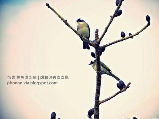 IMG_2434.jpg_effected