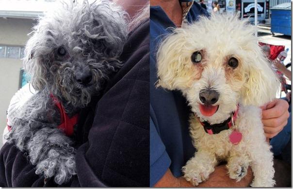 Cachorro cego abandonado encontrou uma nova familia (19)