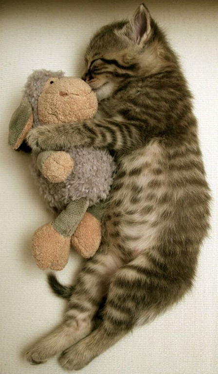 sleepy-kitten-8