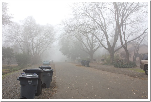 111220_fog_garbage_cans