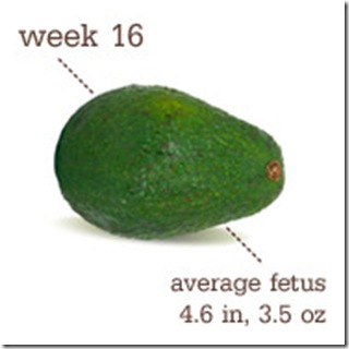 16 Weeks-Avocado