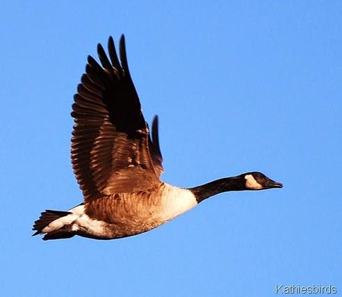 8. Wild goose 3