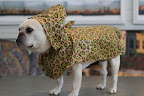 Don't I look smashing in this Leopard Rain Coat?  This draped cape is not only trendy, but so high-end!